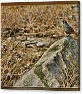 Quail On Rock Canvas Print