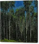 Quaking Aspens Canvas Print