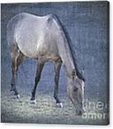 Quarter Horse In Blue Canvas Print