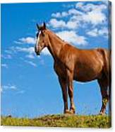Quarter Horse Canvas Print