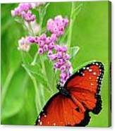 Queen Butterfly And Pink Flowers Canvas Print
