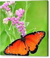 Queen Butterfly Wings With Pink Flowers Canvas Print