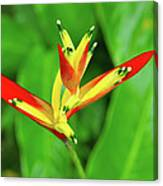 Queen Lily Canvas Print