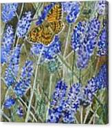 Queen Of Spain Fritillary And Lavender Canvas Print