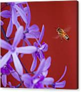 Queen's Wreath Honey Bee Canvas Print