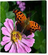 Question Mark Butterfly And Zinnia Flower Canvas Print