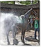 Quick Shower Before The Race Canvas Print