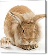 Rabbit And Dwarf Hamster Canvas Print