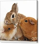 Rabbit And Guinea Pigs Canvas Print