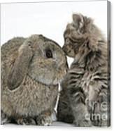 Rabbit And Kitten Canvas Print
