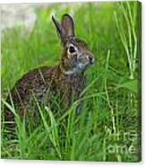 Rabbit Eating Grass In The Forest Canvas Print