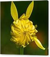 Rabbit Flower Canvas Print