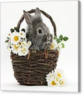 Rabbit In A Basket With Flowers Canvas Print