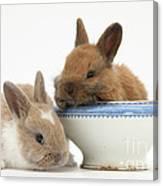 Rabbits And China Bowl Canvas Print