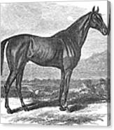 Racehorse, 1867 Canvas Print