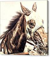 Racehorse Canvas Print