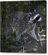 Racoon Emerging From The Woods Canvas Print