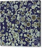 Radiolarian Ooze Lm Canvas Print