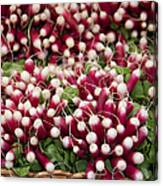 Radishes In A Basket Canvas Print