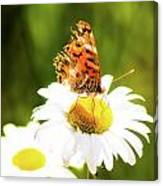 Raggedy Butterflly Canvas Print