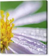 Rain Drop On Flower Canvas Print