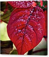 Rain Drops On Red Leaves Canvas Print