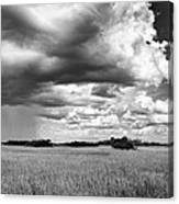 Rain Everglades Canvas Print