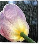 Rain Falling On A Tulip Canvas Print