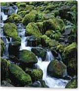 Rain Forest Stream Canvas Print