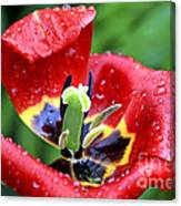 Rain Kissed Canvas Print