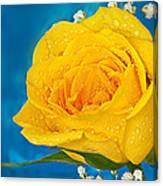 Rain On A Yellow Rose Canvas Print