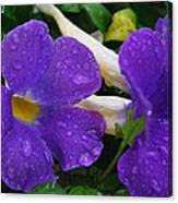 Rain On Purple Wonder Canvas Print