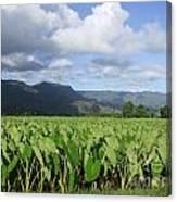 Rain Over A Hanalei Taro Field Canvas Print
