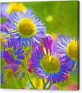 Rainbow Colored Weed Daisies Canvas Print
