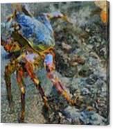 Rainbow Crab Canvas Print