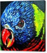 Rainbow Lorikeet Look Canvas Print