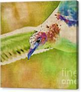 Rainbow Seagull Canvas Print