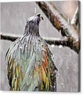 Rainbow Showers Canvas Print