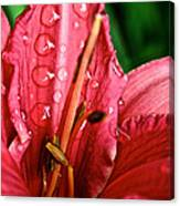 Raindrop Row Canvas Print