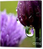 Raindrops On Chives Canvas Print