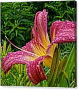 Raindrops On Lilly Canvas Print