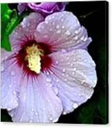 Raindrops On Roses Of Sharon Canvas Print