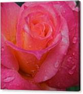 Raindrops On Roses Ten Canvas Print