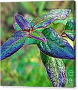 Raindrops On The Leaves Canvas Print