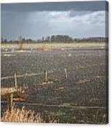 Rainfall Canvas Print
