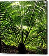 Rainforest Backlight Canvas Print