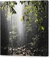 Rainforest, Bellingen, Australia Canvas Print