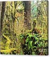 Rainforest Salad Bar Canvas Print