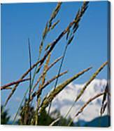 Rainier Weeds Canvas Print