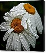 Rainy Day Daisies Canvas Print
